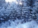 Зимний лес_1
