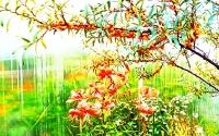 Осенний вид_1