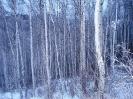 Зимний лес_2