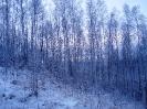 Зимний лес_3
