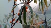 Осенние заморозки_4