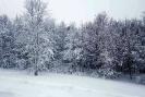 Зимний лес Забайкалья_1