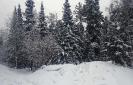 Зимний лес Забайкалья_2