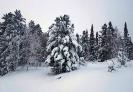 Зимний лес Забайкалья_3